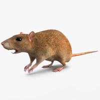 rat modelled 3d model