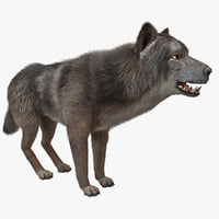 max wolf animal fur