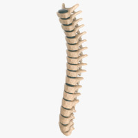 spine 3d max