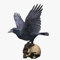 3d common raven
