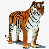 3d tiger amur rigged cat