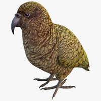 3ds max kea parrot bird