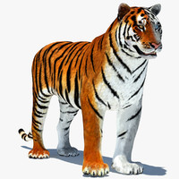 3d tiger rigged cat