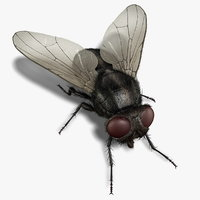 Housefly (RIGGED) (FUR)
