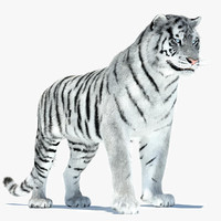 Tiger Amur White Rigged