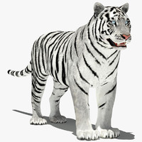 3d amur tiger - white model