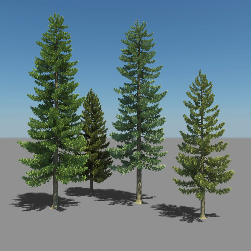 pine trees _View01-2.jpg