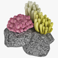 3dsmax coral marine life