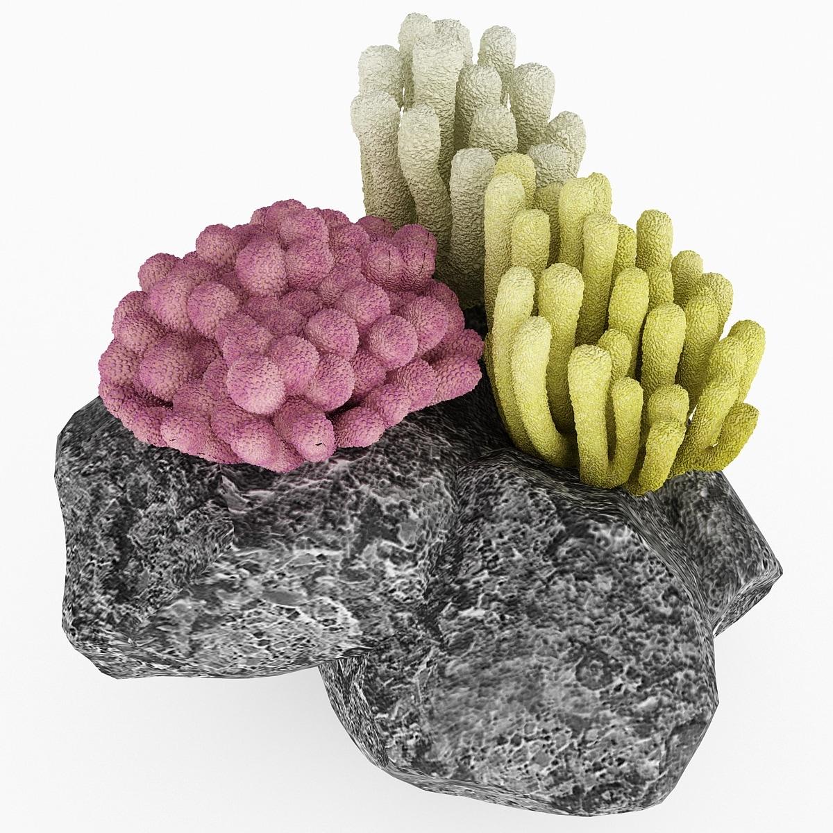 130831_Corals_Set_005.jpg