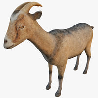 3d model domestic goat capra hircus