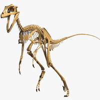 3d model dino skeleton dromaeosaurus