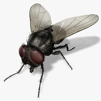 3d obj housefly fly