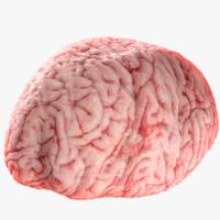 realistic brain 3d max