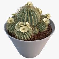 3ds epiphyllum cactus