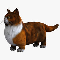 munchkin cat animal 3d model