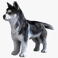 3dsmax siberian husky puppy