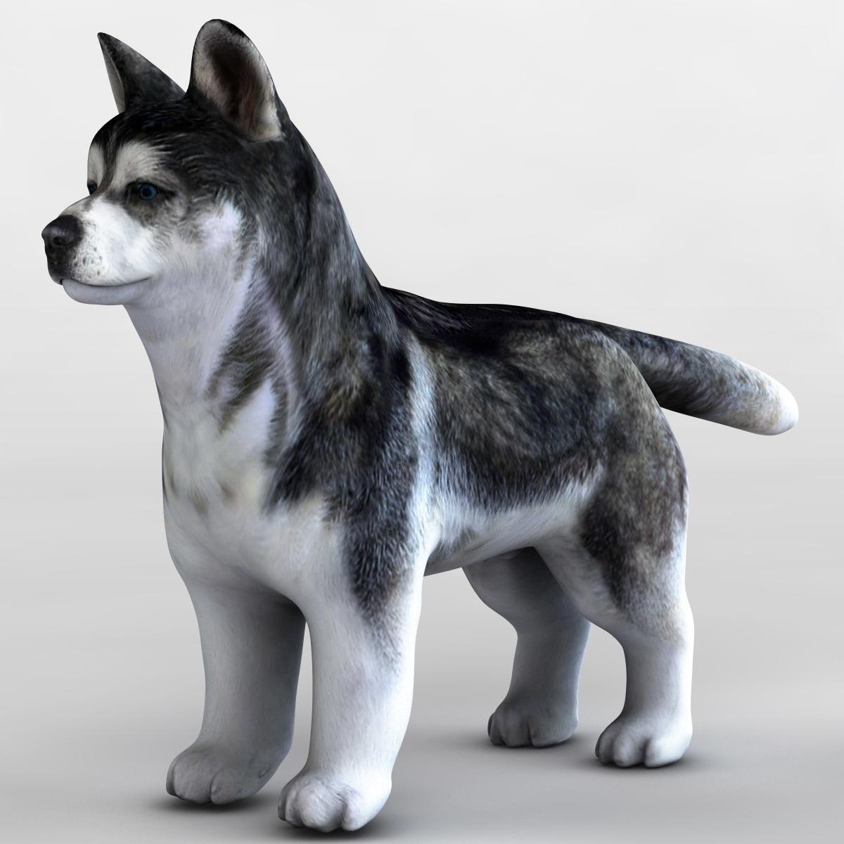 117750_Siberian_Husky_Puppie_005.jpg