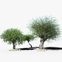 3d model olea tree v-ray iray