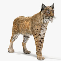 3d bobcat rigging animation cat