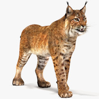 3ds max eurasian lynx cat