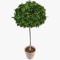 c4d plant potted