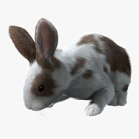Rabbit Spotted (RIGGED) (FUR)