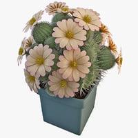 3ds max turbinicarpus pseudopectinatus cactus plant