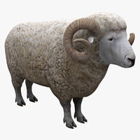 3d model wether sheep