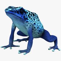 maya poison dart frog
