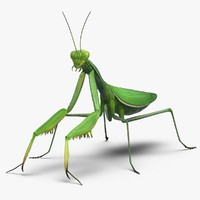 praying mantis 3D models