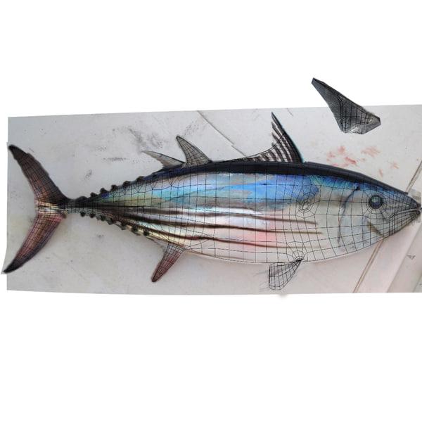 3d Tuna Fish: Skipjack Tuna 3d Max