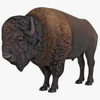 3d bison animal