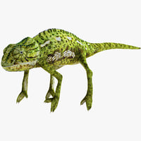 chameleon modelled 3d model