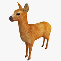 3ds max roe deer