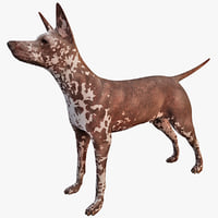 3d xoloitzcuintli mexican hairless dog