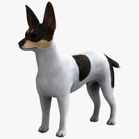 Miniature Fox Terrier 3D models