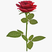 rose flower 2 lwo