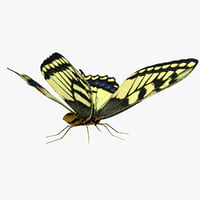 tiger swallowtail butterfly 3d model