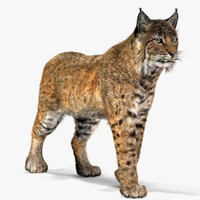 3d model bobcat fur lynx rufus