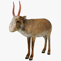 saiga antelope 3d model