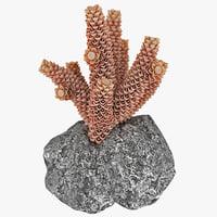 3d model coral marine life
