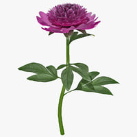 3d pink peony plant flower