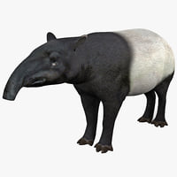 3d tapir animal modelled