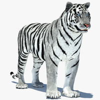 3d model tiger amur white rigged