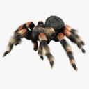 arachnid 3D models