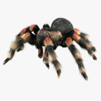 Tarantula (ANIMATED) (FUR)