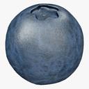 blueberry 3D models