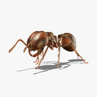 Fire Ant (ANIMATED)