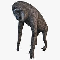 maya agile gibbon