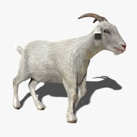 Goat (1) (ANIMATED) (FUR)